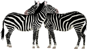 Fairly realistic drawing of two zebras
