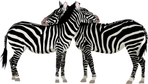 Zebras, hoof-beats and Dr. House: Differential Diagnosis