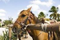 hitchedhorse