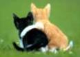KittyFriends