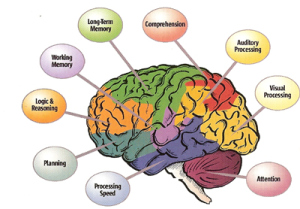 Executive Functioning Disorders – not just kid stuff | ADD ...